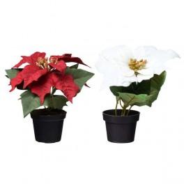 Gėlė vazonėlyje Puansetija 18cm